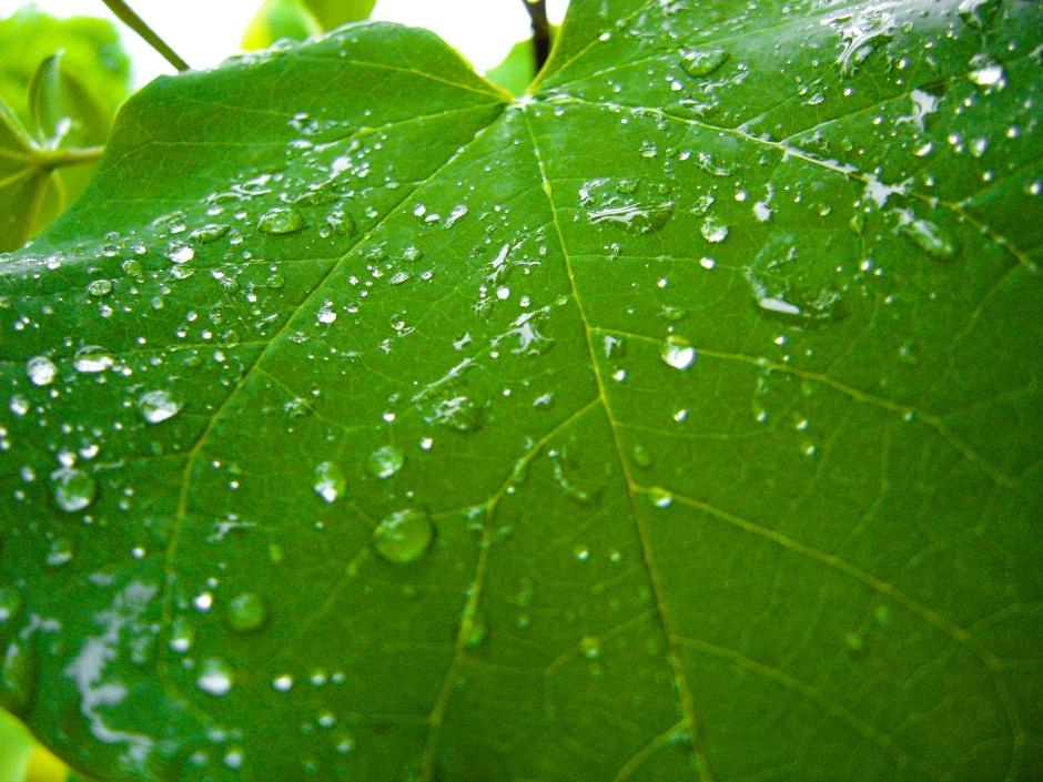 Rain on Grapevine
