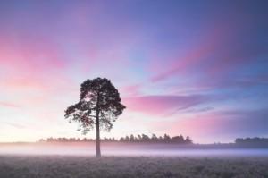 Colin-Roberts-Land-of-mist-Beaulieu-Heath--500x332