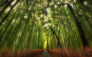forest-bamboo-300x187