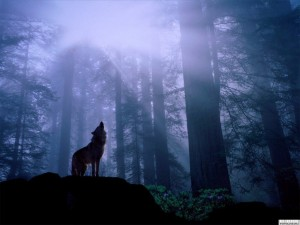 Wolf_howling_at_moon-300x225