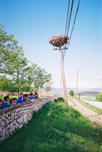 bird-stork-in-nest-on-top-of-telegraph-pole-with-Turkish-school-children-Turkey-SEW