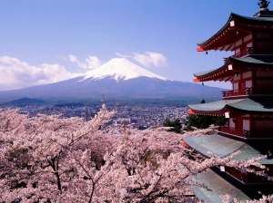 cherry_blossoms_and_mount_1024x768
