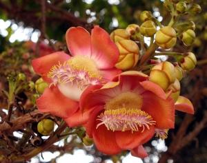 sala_flower_jpg