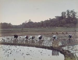 Planting_rice;_Ogawa_Kazumasa
