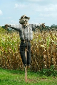 scarecrow-protecting-a-corn-field